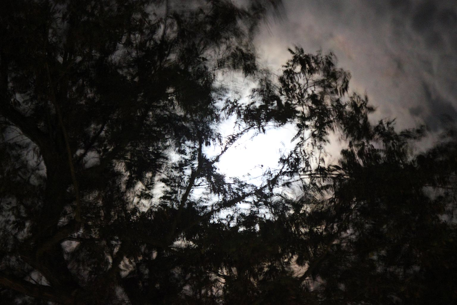 trees reflected in puddle