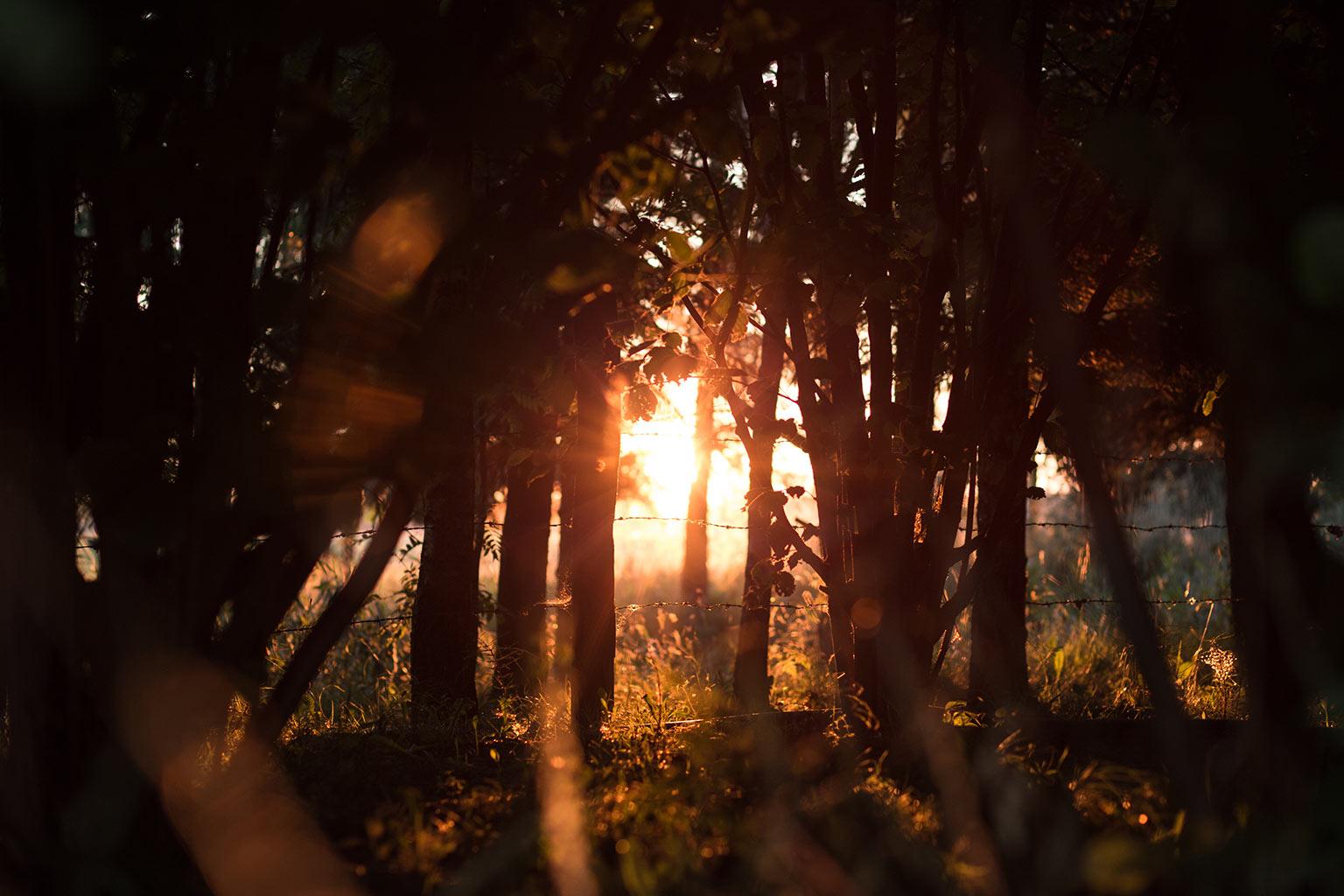 evening sunlight through trees